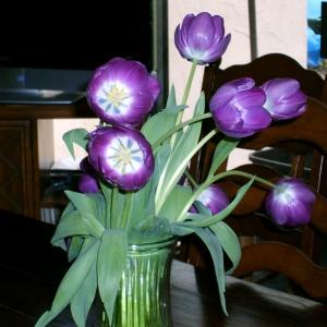 Бродячие тюльпаны