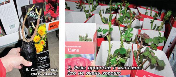 Как сохранить саженцы к весне в домашних условиях